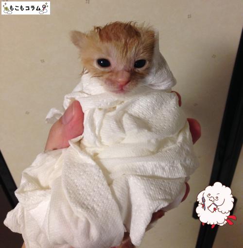 子猫シャワー01