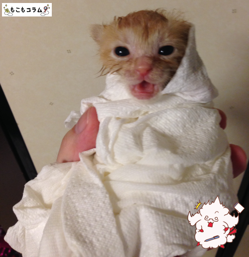 子猫シャワー02