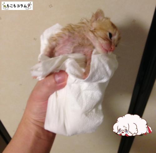 子猫シャワー03