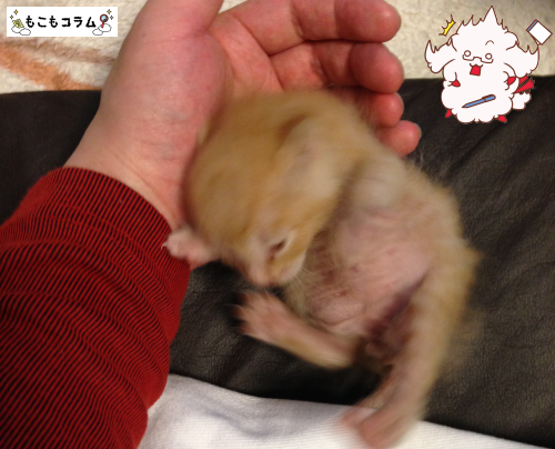 子猫の爪が剥げた2