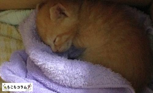 子猫も爆睡