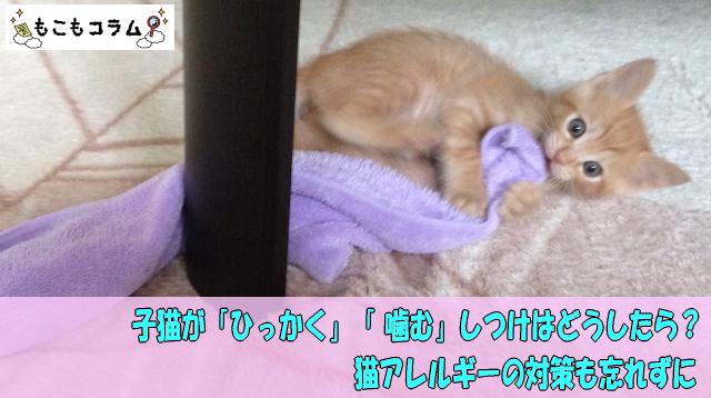 子猫が「ひっかく」「 噛む」しつけはどうしたら?猫アレルギーの対策も忘れずに