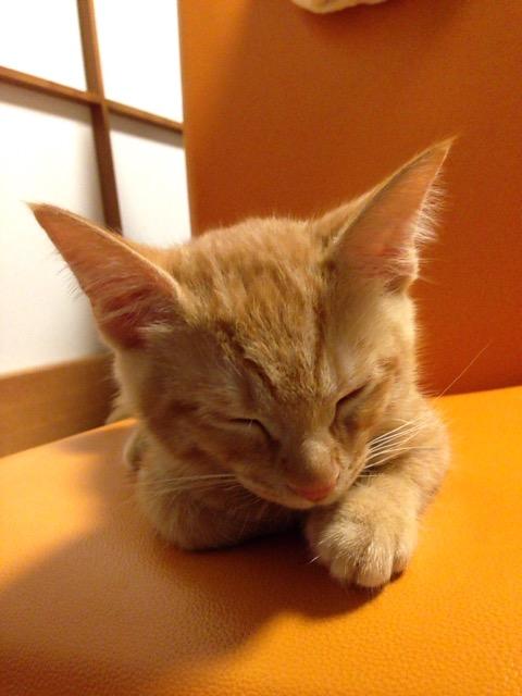 猫の語源は寝る子2