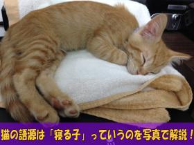 猫の語源は「寝る子」っていうのを写真で解説!