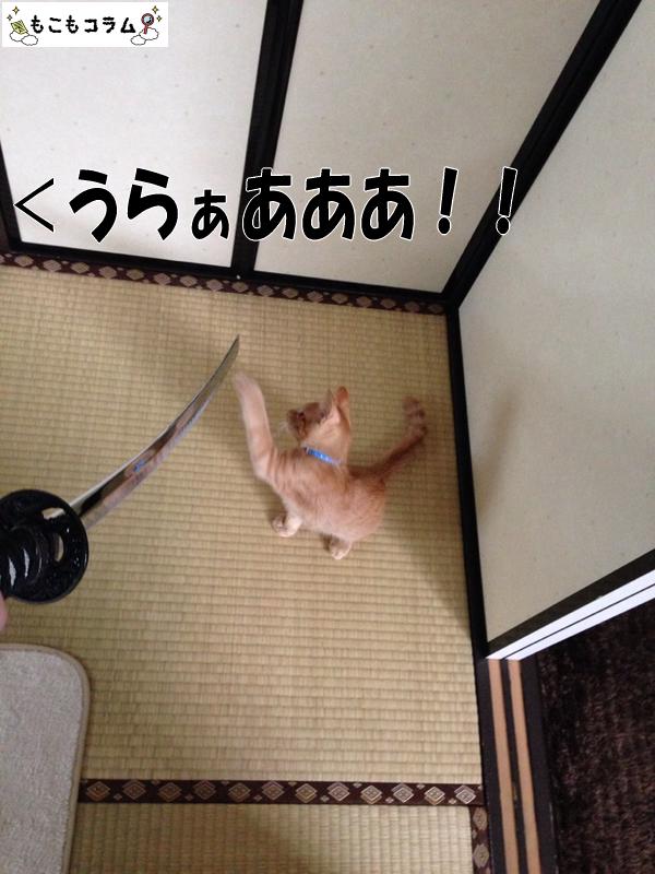 世界猫の日に猫とちゃんばらして遊んでみた04