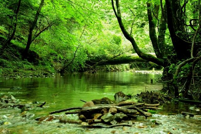 ノロウィルスが川を下って感染力拡大