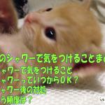 子猫シャワー