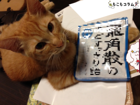 猫と仲良くなる方法が判明wwwみんなアノのど飴を使ってみろwww