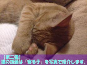 【第二弾】猫の語源は「寝る子」を写真で紹介します。